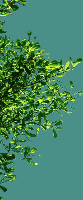 www.mr.green